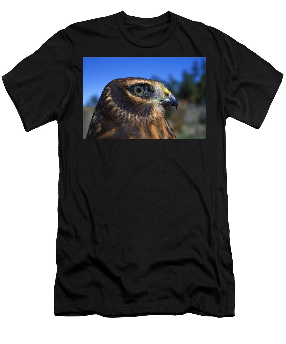 Outdoors Men's T-Shirt (Athletic Fit) featuring the photograph Northern Harrier Raptor In Profile by Natural Selection David Ponton