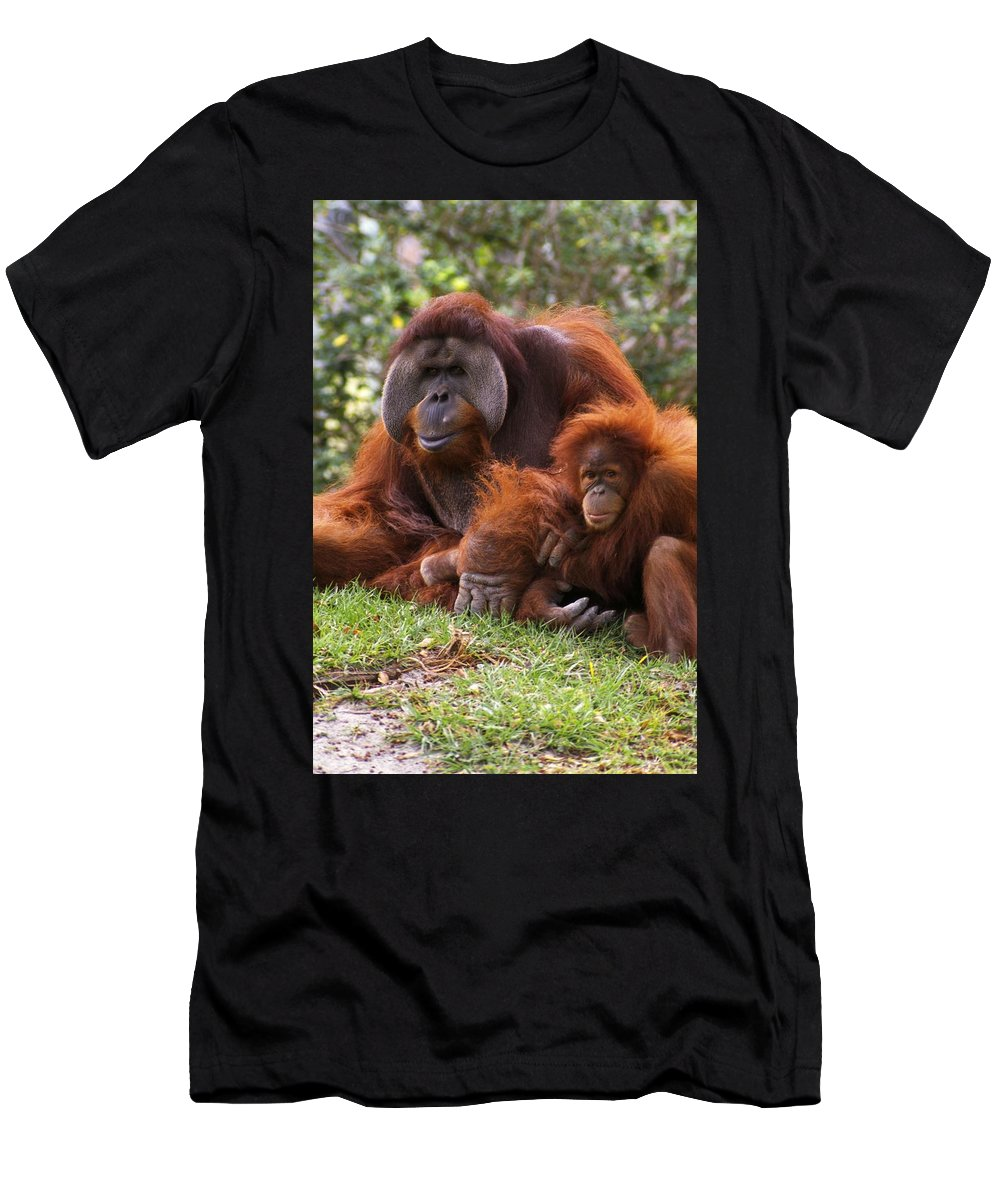 Animal Men's T-Shirt (Athletic Fit) featuring the photograph Orangutan Mother And Baby by Natural Selection Ralph Curtin