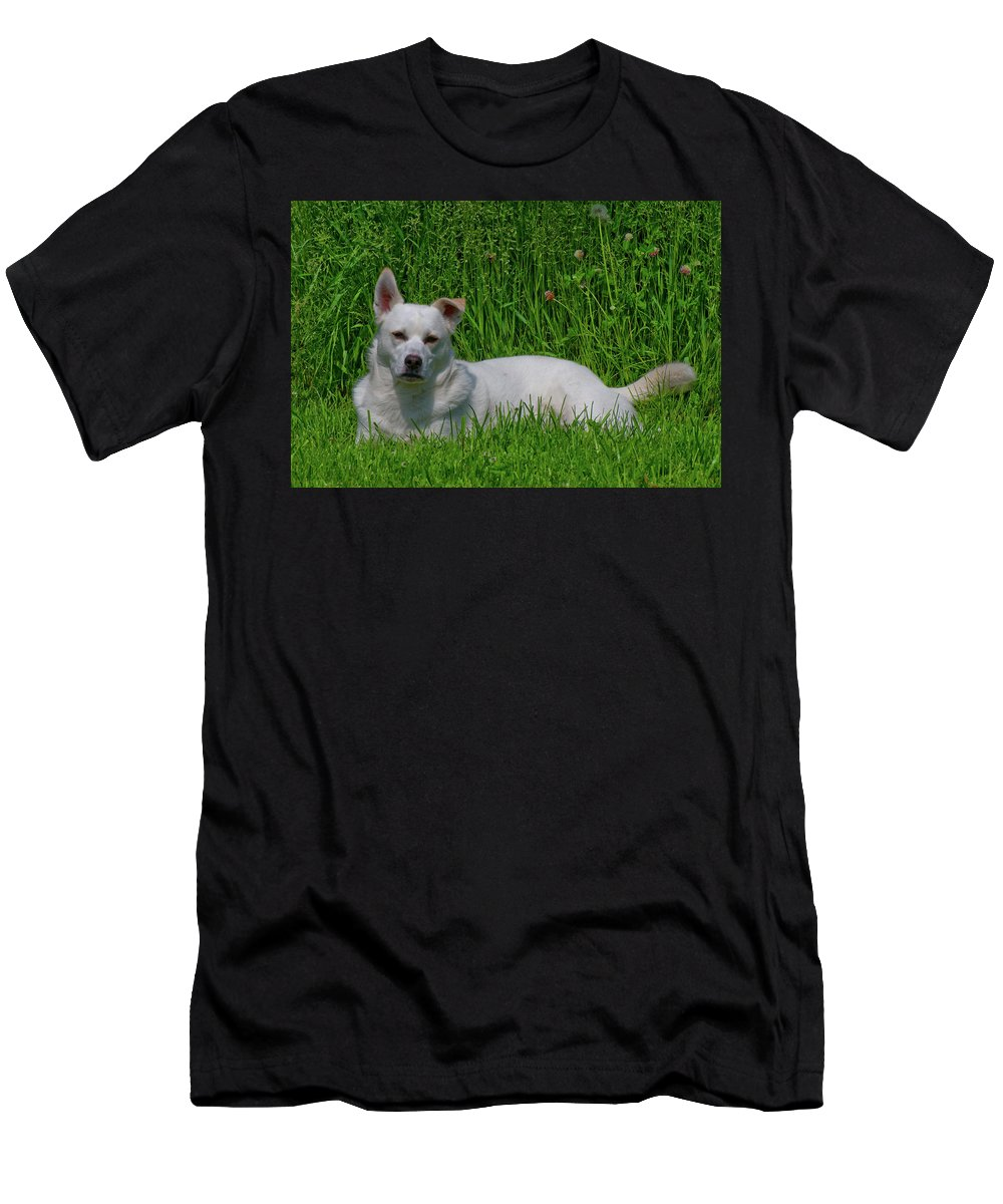 Dog Men's T-Shirt (Athletic Fit) featuring the photograph Orvis 0360 by Guy Whiteley