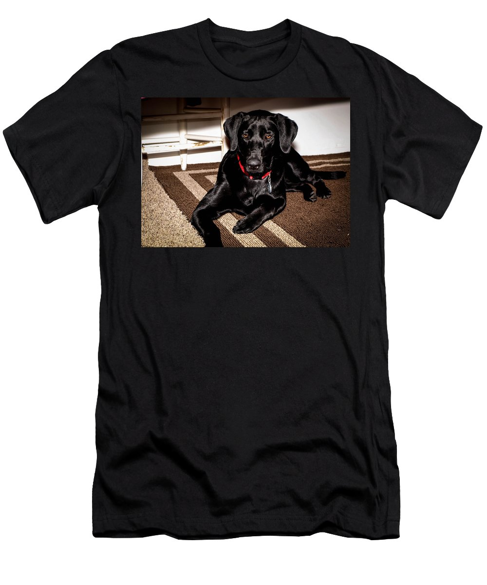 Dog Men's T-Shirt (Athletic Fit) featuring the photograph Paisley by Cathy Smith
