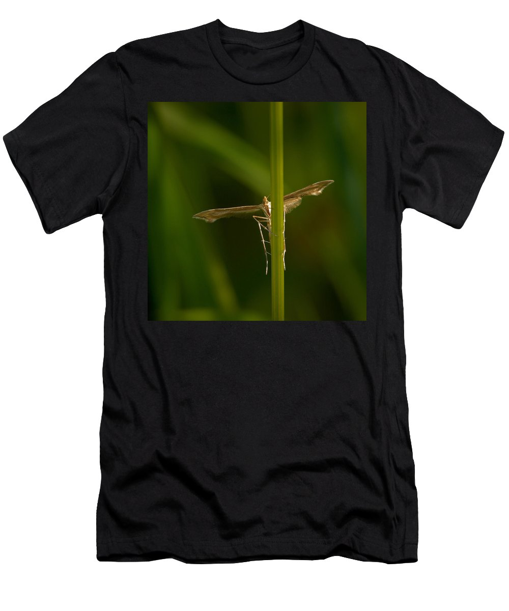 Jouko Lehto Men's T-Shirt (Athletic Fit) featuring the photograph Plume Moth by Jouko Lehto