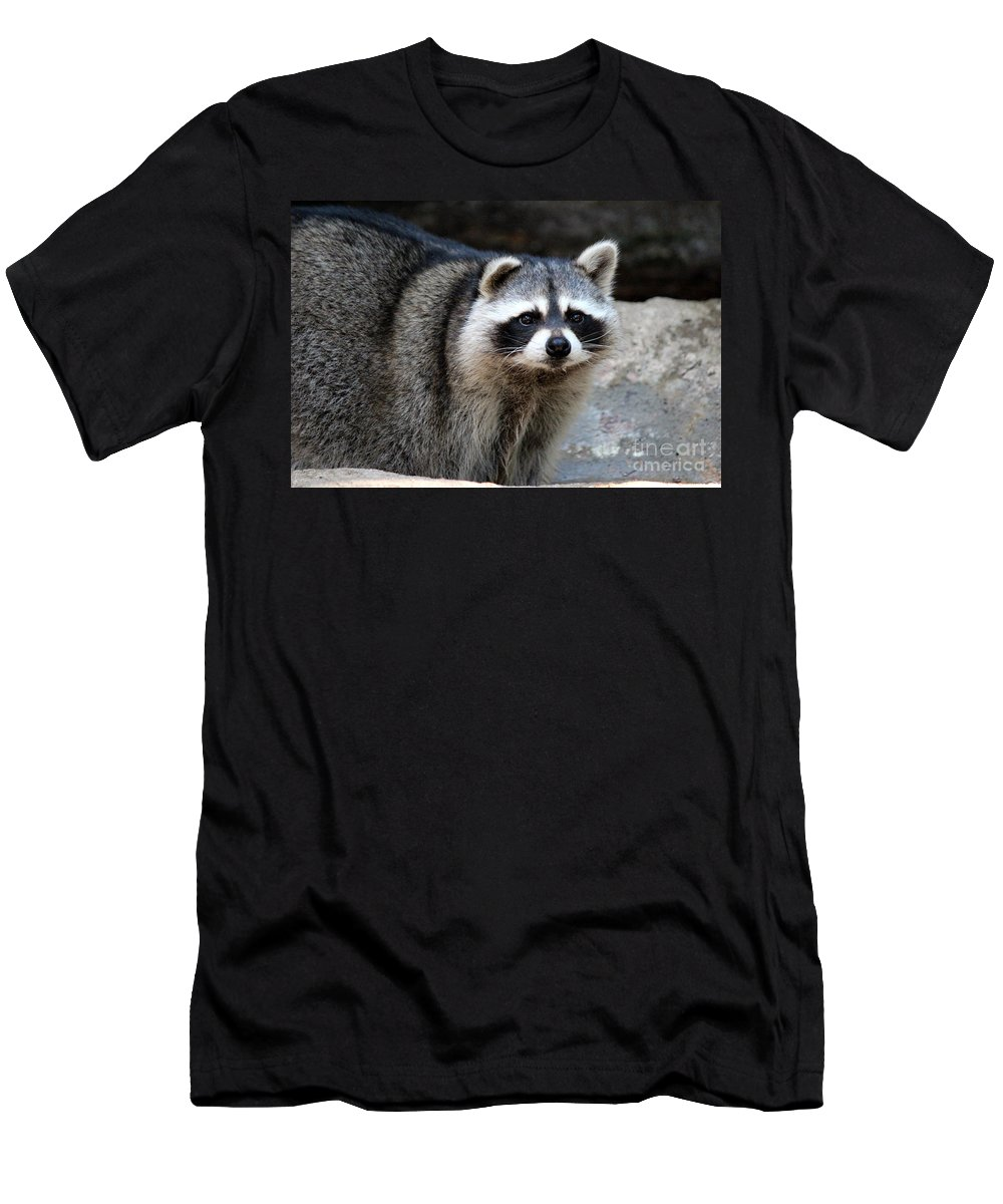 Raccoon Men's T-Shirt (Athletic Fit) featuring the photograph Portrait Of A Masked Bandit by Kathy White