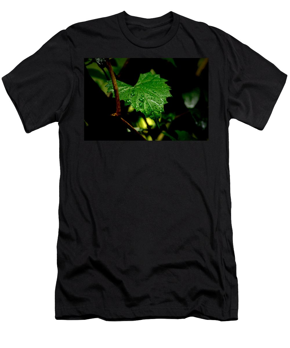 Leaf Men's T-Shirt (Athletic Fit) featuring the photograph Rain On Ivy by David Weeks