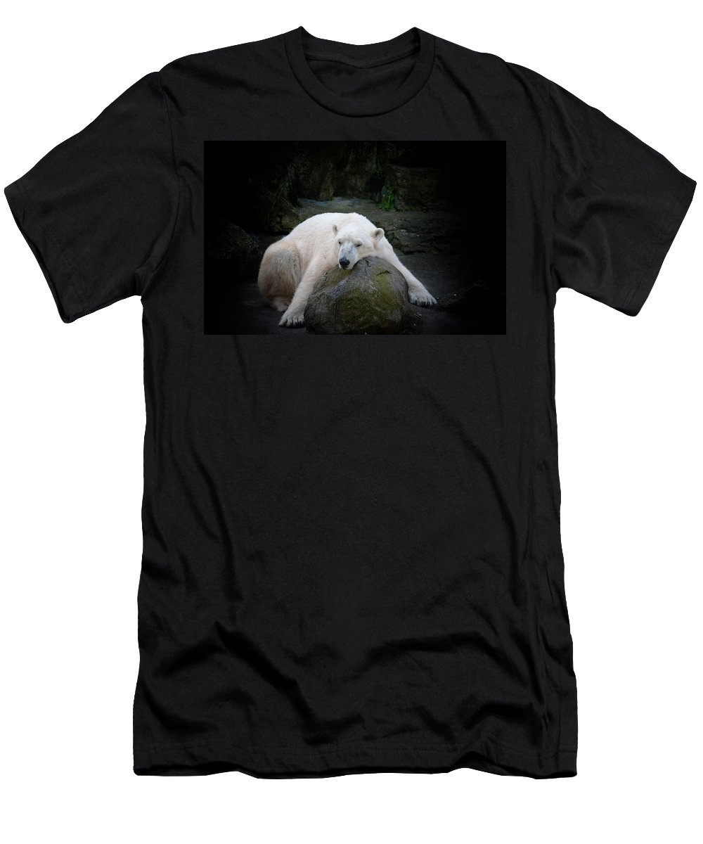 Polar Bear Men's T-Shirt (Athletic Fit) featuring the photograph Resting Polar by Karol Livote
