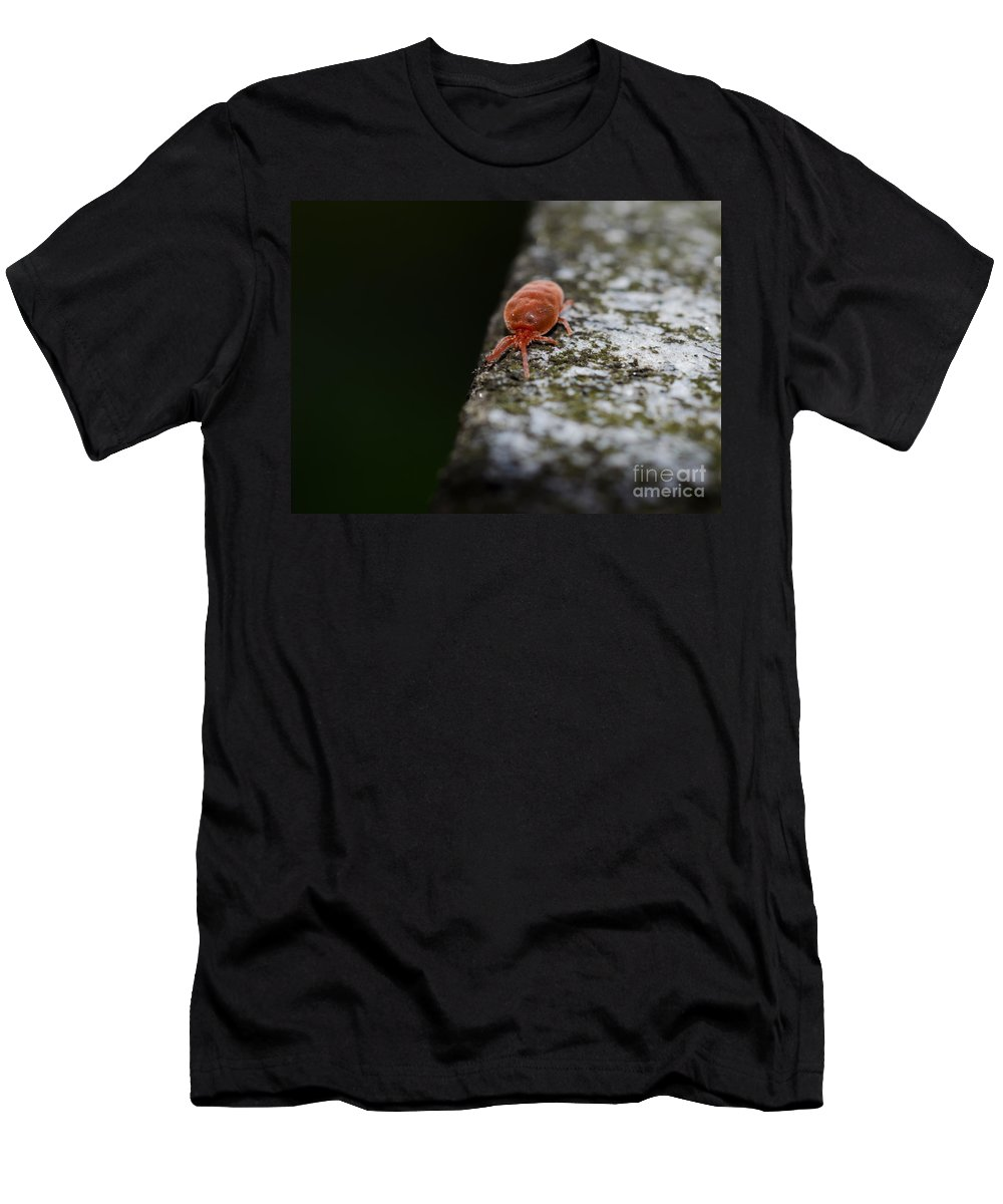Insect Men's T-Shirt (Athletic Fit) featuring the photograph Small Red Insect by Mats Silvan
