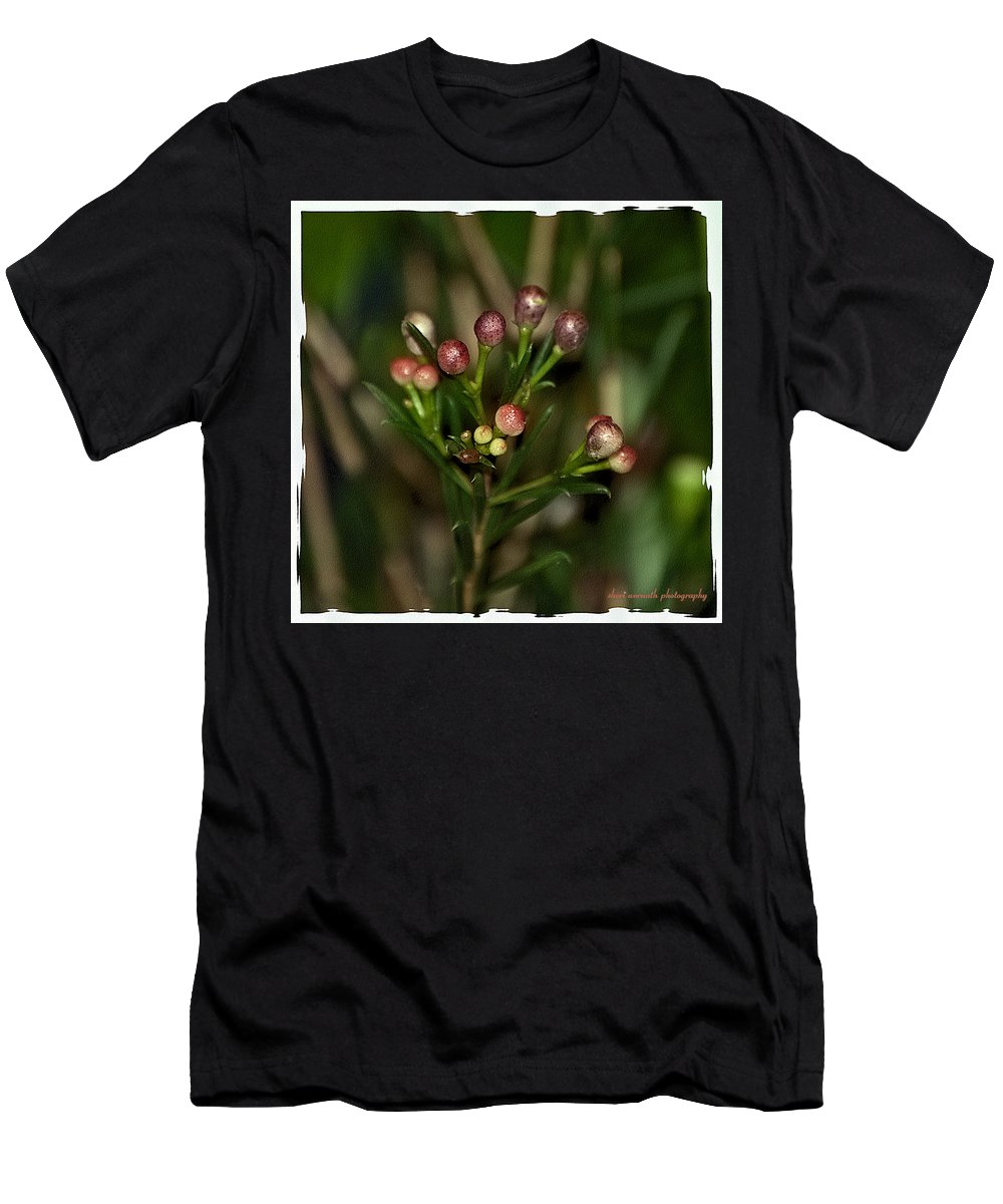 Plants Men's T-Shirt (Athletic Fit) featuring the photograph Spring Sprig by Sheri Bartoszek