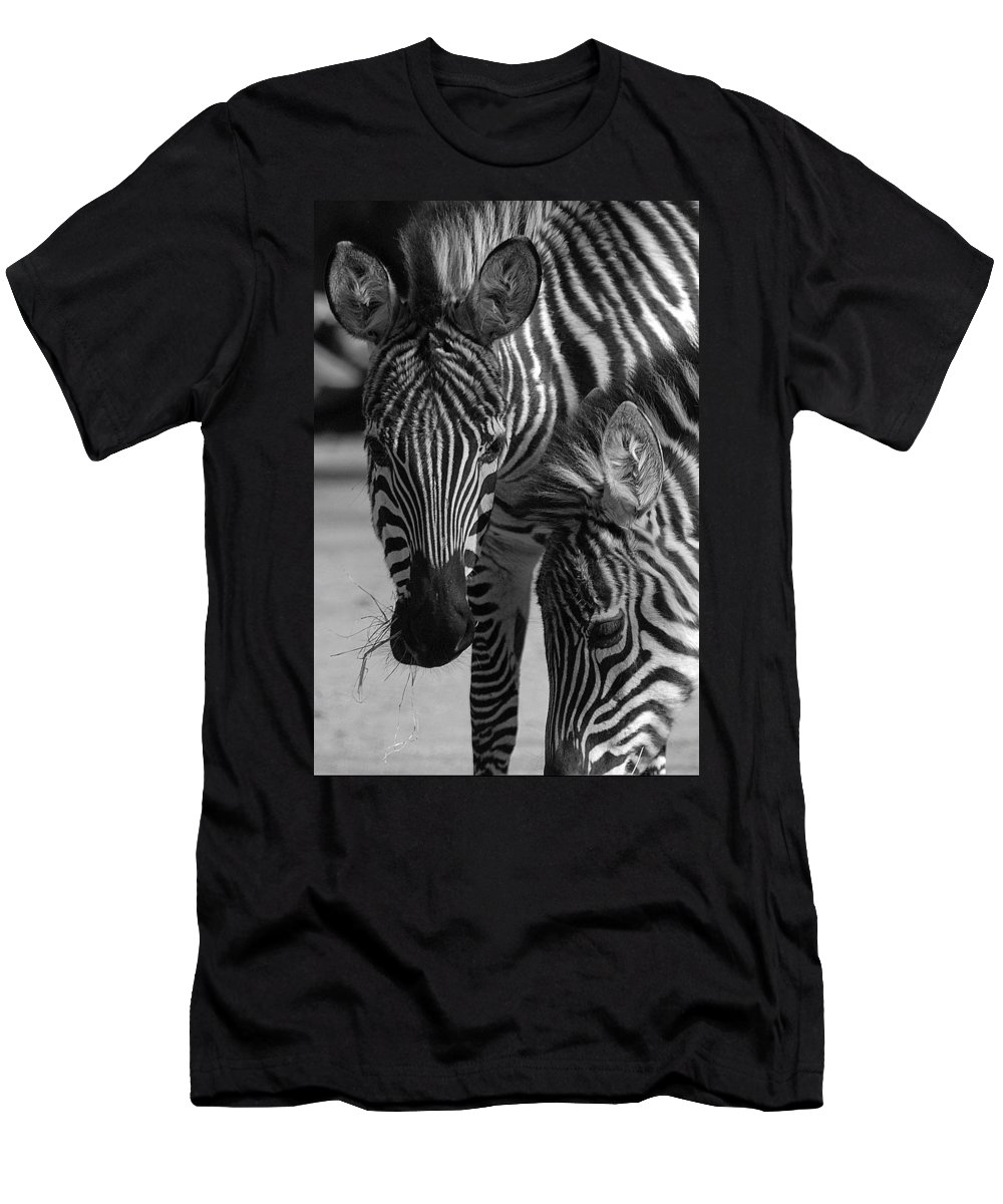 Stripes Men's T-Shirt (Athletic Fit) featuring the photograph Stripes - Zebra by D'Arcy Evans