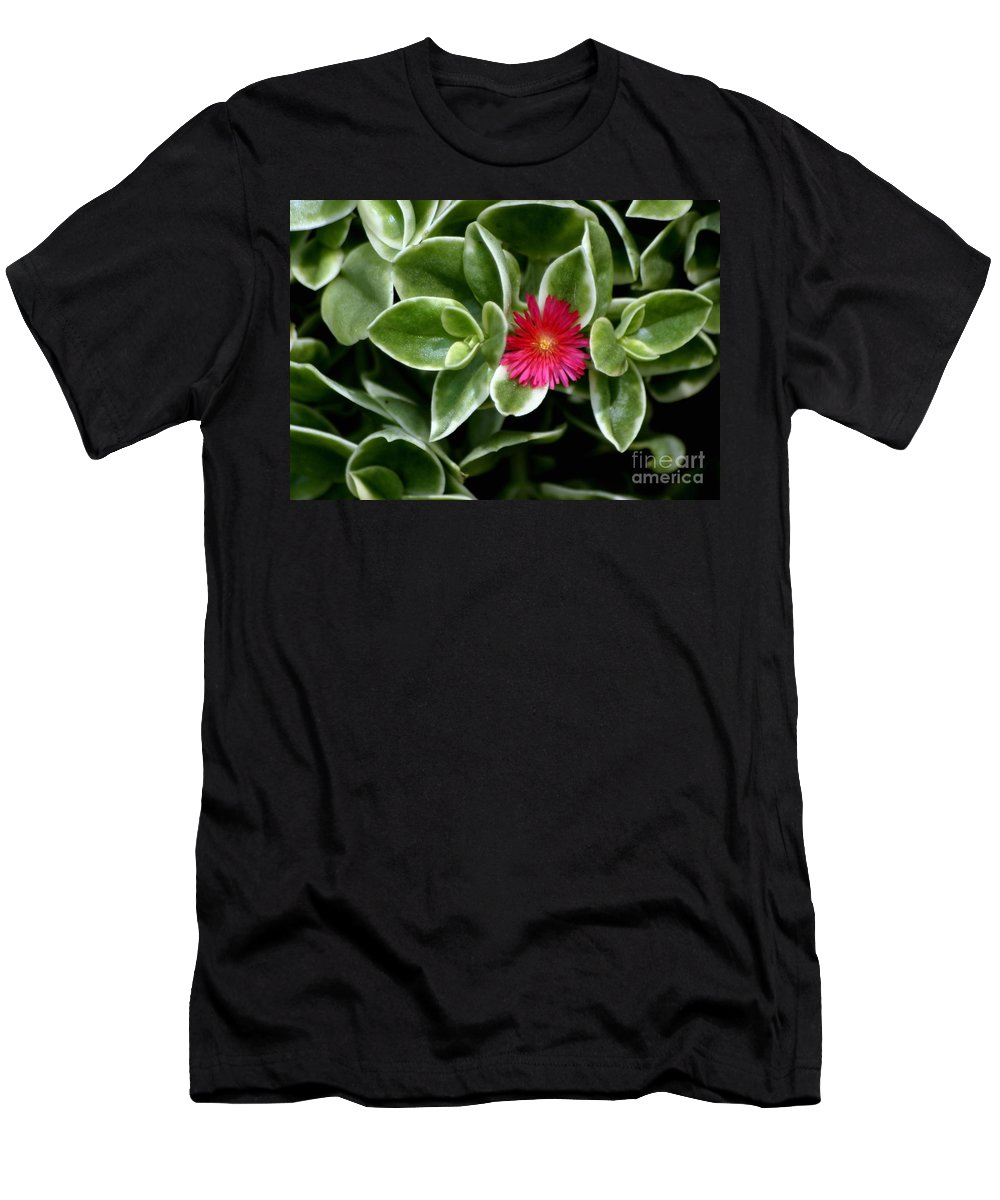 Succulent Men's T-Shirt (Athletic Fit) featuring the photograph Stuck In The Middle With You by Living Color Photography Lorraine Lynch