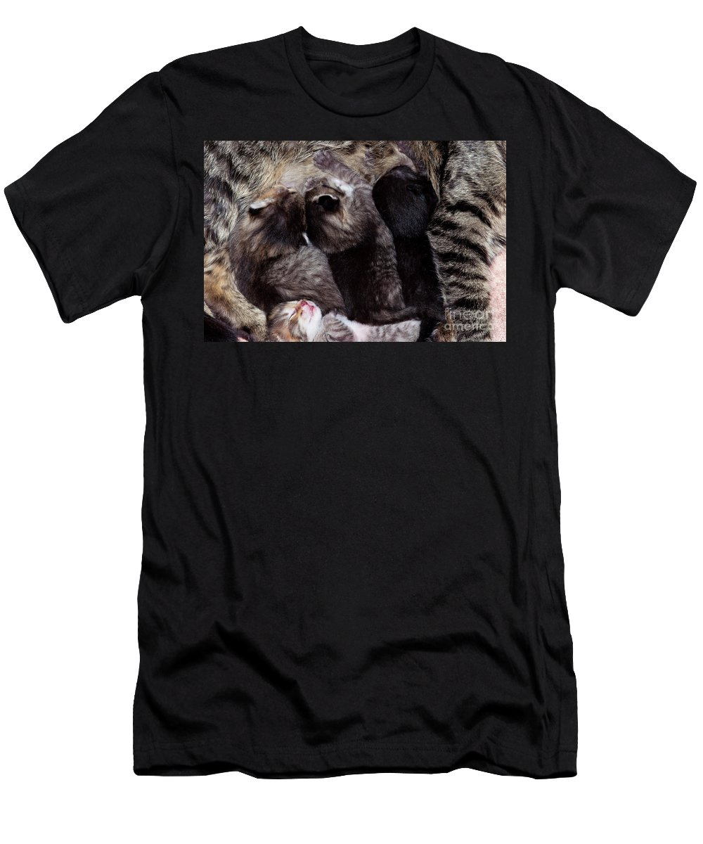 Puppy Men's T-Shirt (Athletic Fit) featuring the photograph Suckers - Cunning Little Kittens by Michal Boubin