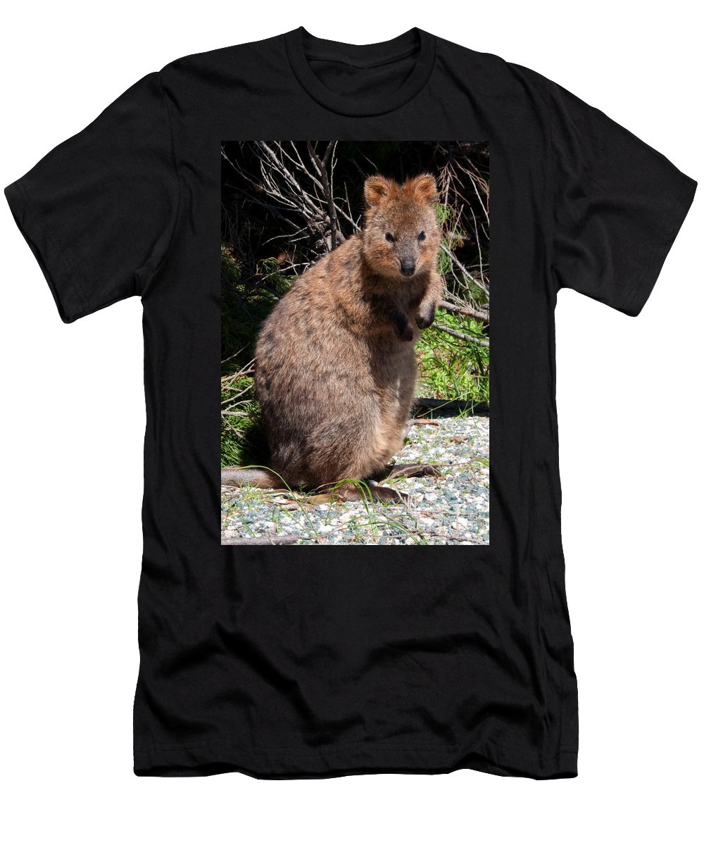Quokka Men's T-Shirt (Athletic Fit) featuring the photograph The Quokka by Rob Hawkins