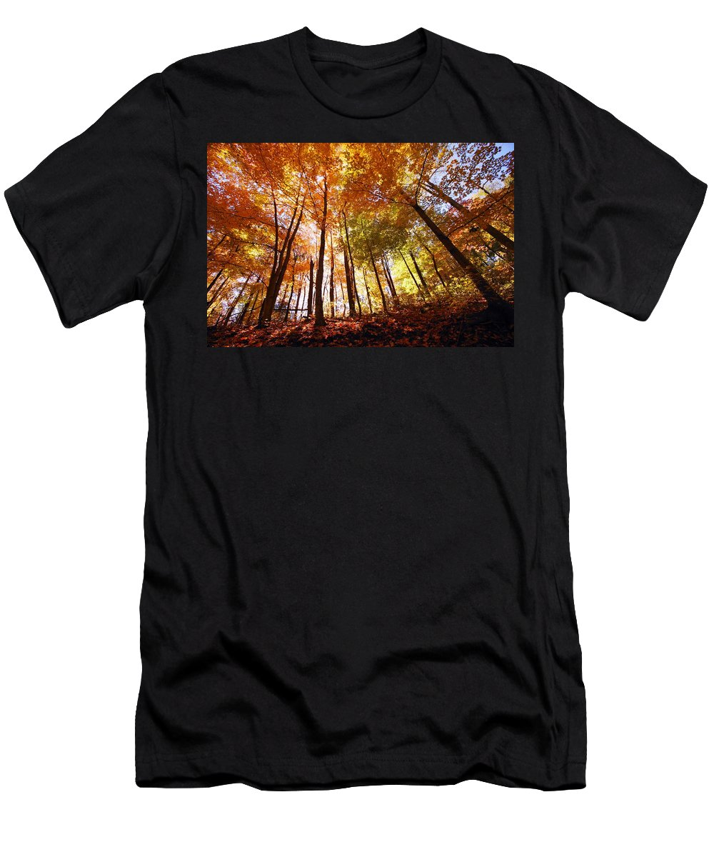 Autumn Colors Men's T-Shirt (Athletic Fit) featuring the photograph Trees In Autumn by Kristy-Anne Glubish