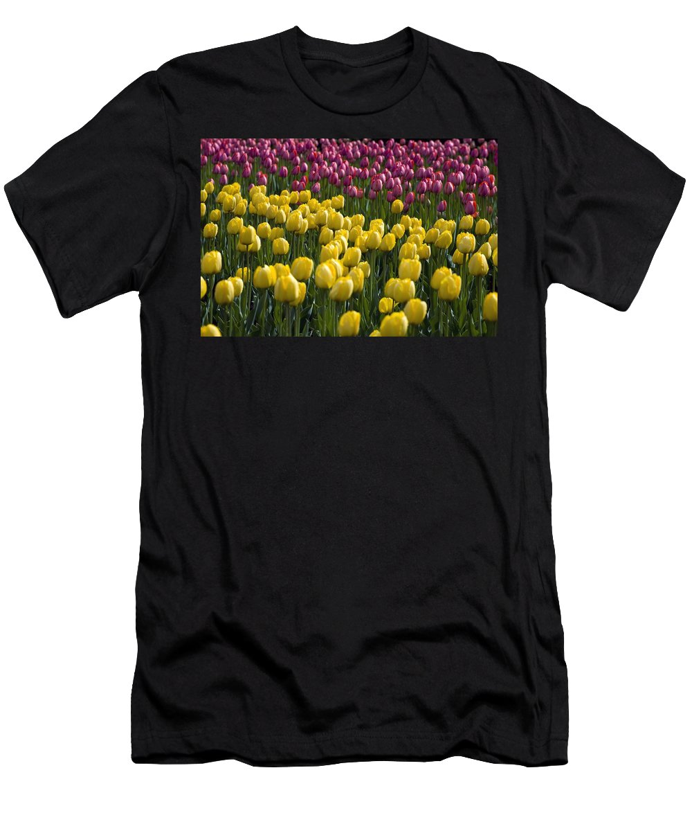 Bunch Men's T-Shirt (Athletic Fit) featuring the photograph Tulips by David Chapman