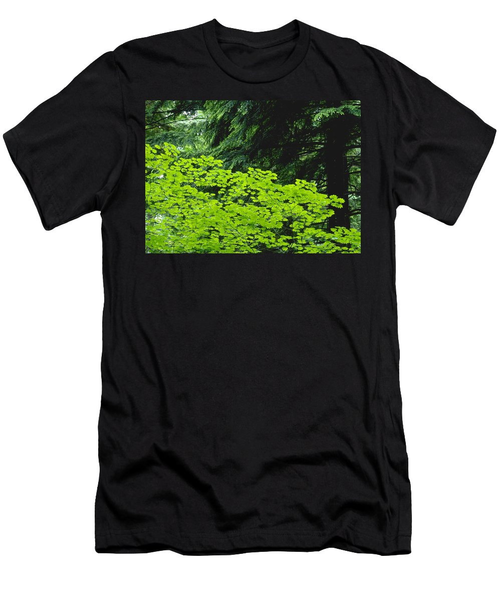 Country Men's T-Shirt (Athletic Fit) featuring the photograph Umbrella Of Trees In Forest by Jim Weeks