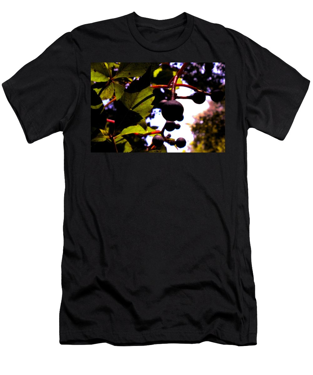 Berries Men's T-Shirt (Athletic Fit) featuring the photograph Virginia Creeper Fruit by Renate Nadi Wesley