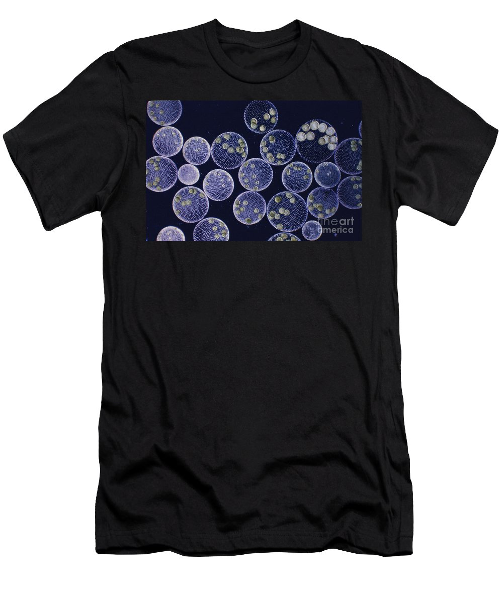 Volvox Men's T-Shirt (Athletic Fit) featuring the photograph Volvox by M I Walker