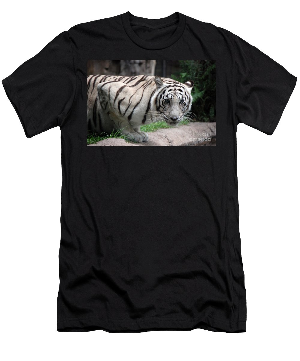 White Tiger Men's T-Shirt (Athletic Fit) featuring the photograph White Bengal Tiger by Robert Meanor