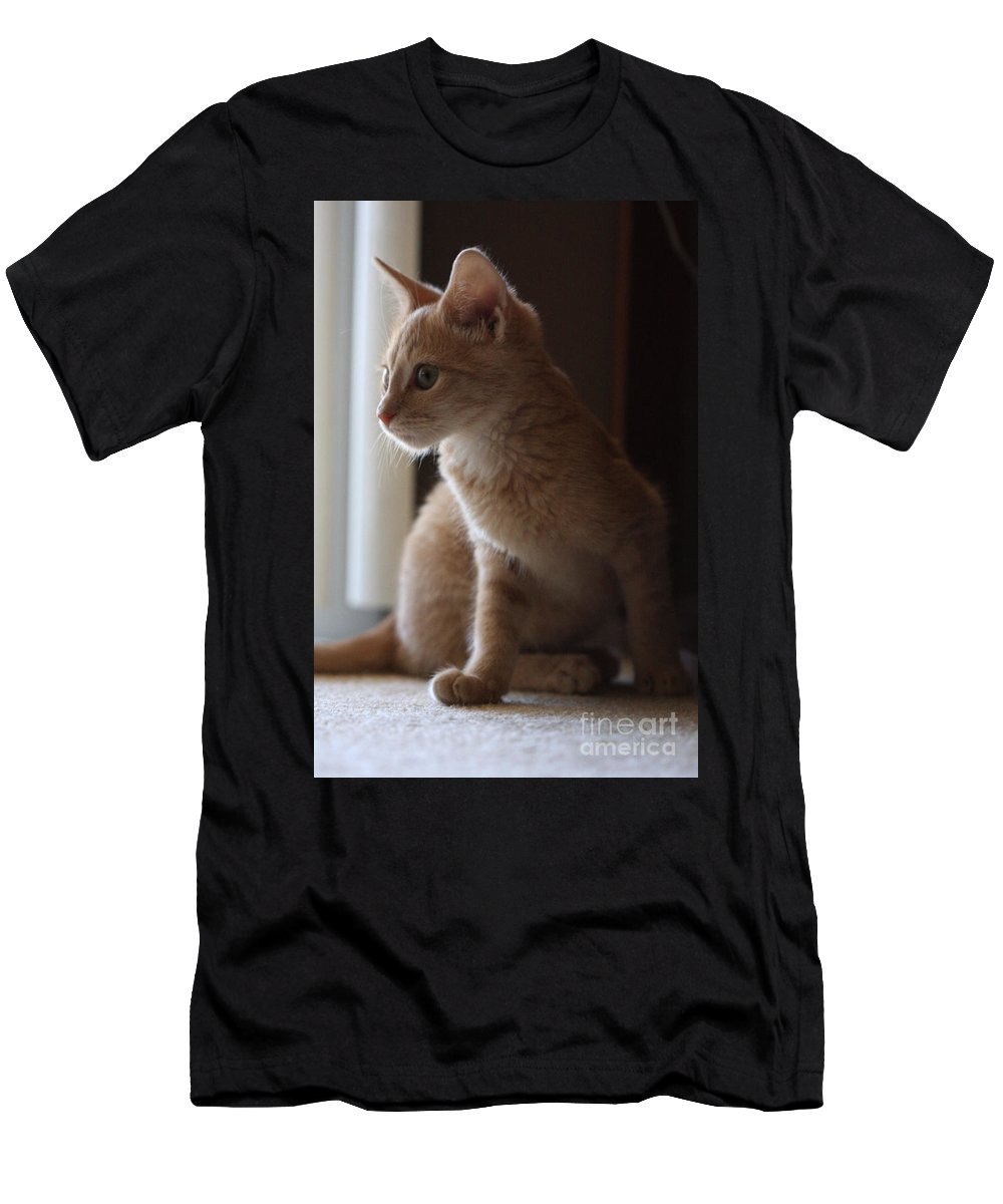 Kittens Men's T-Shirt (Athletic Fit) featuring the photograph Window Light by Kim Henderson