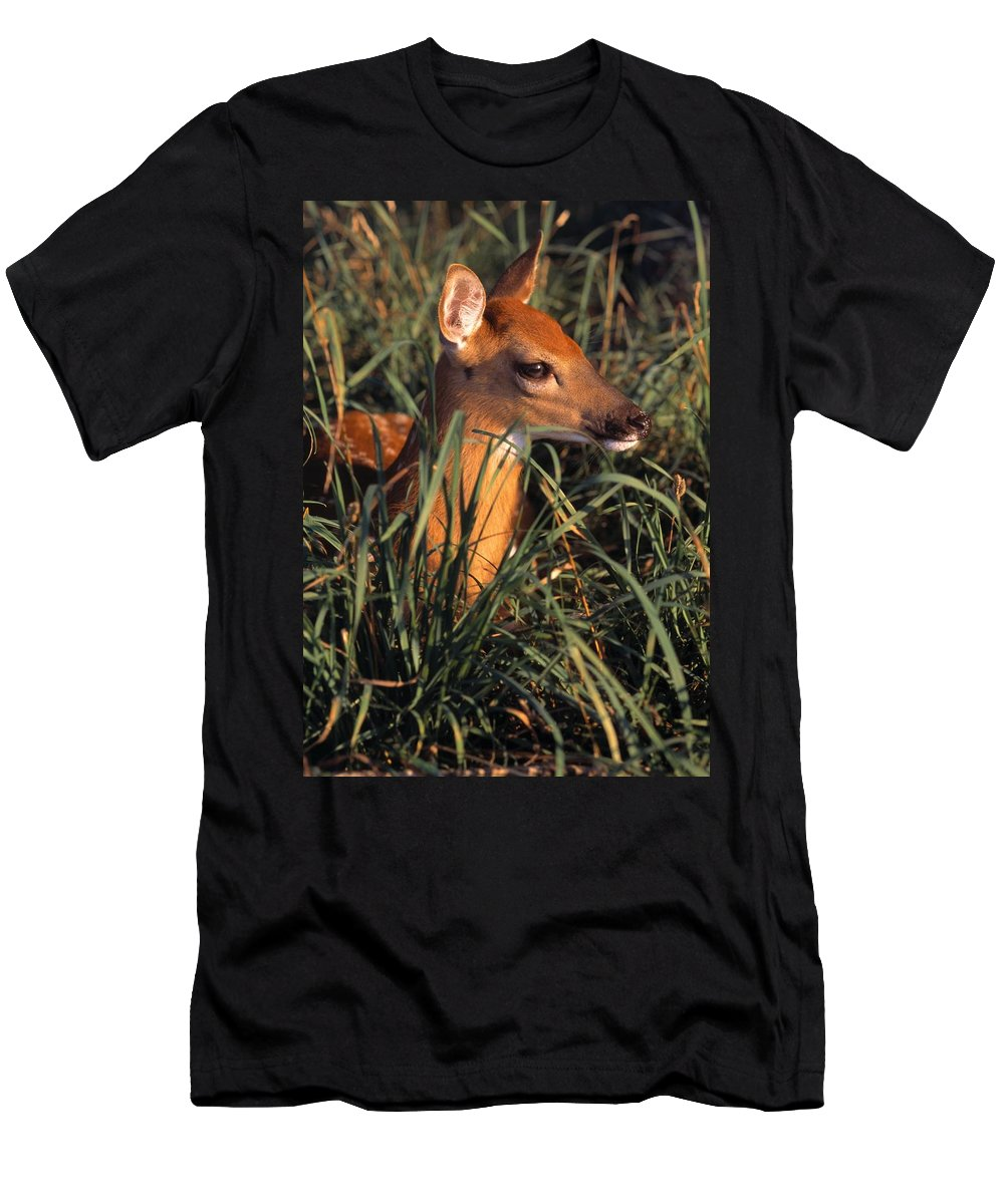 Animal Men's T-Shirt (Athletic Fit) featuring the photograph Young Deer Laying In Grass by Natural Selection Bill Byrne