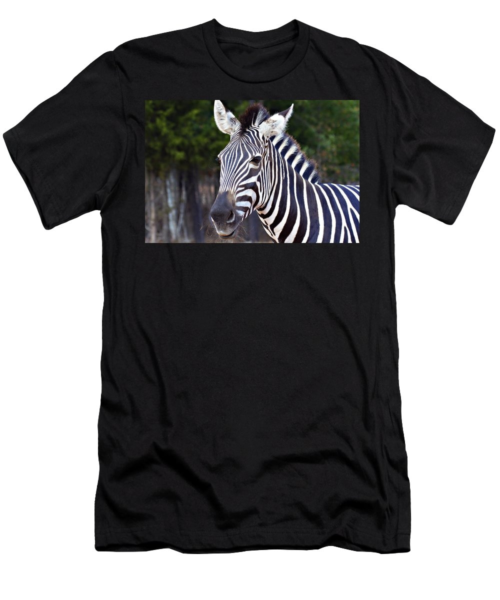 Zebra Men's T-Shirt (Athletic Fit) featuring the photograph Zebra Symmetry by Douglas Barnard