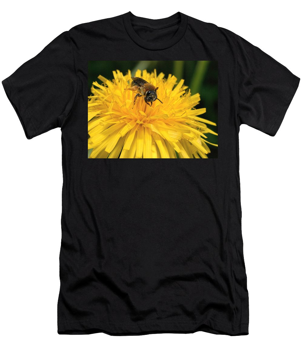 Lehtokukka Men's T-Shirt (Athletic Fit) featuring the photograph A Bee In A Dandelion by Jouko Lehto