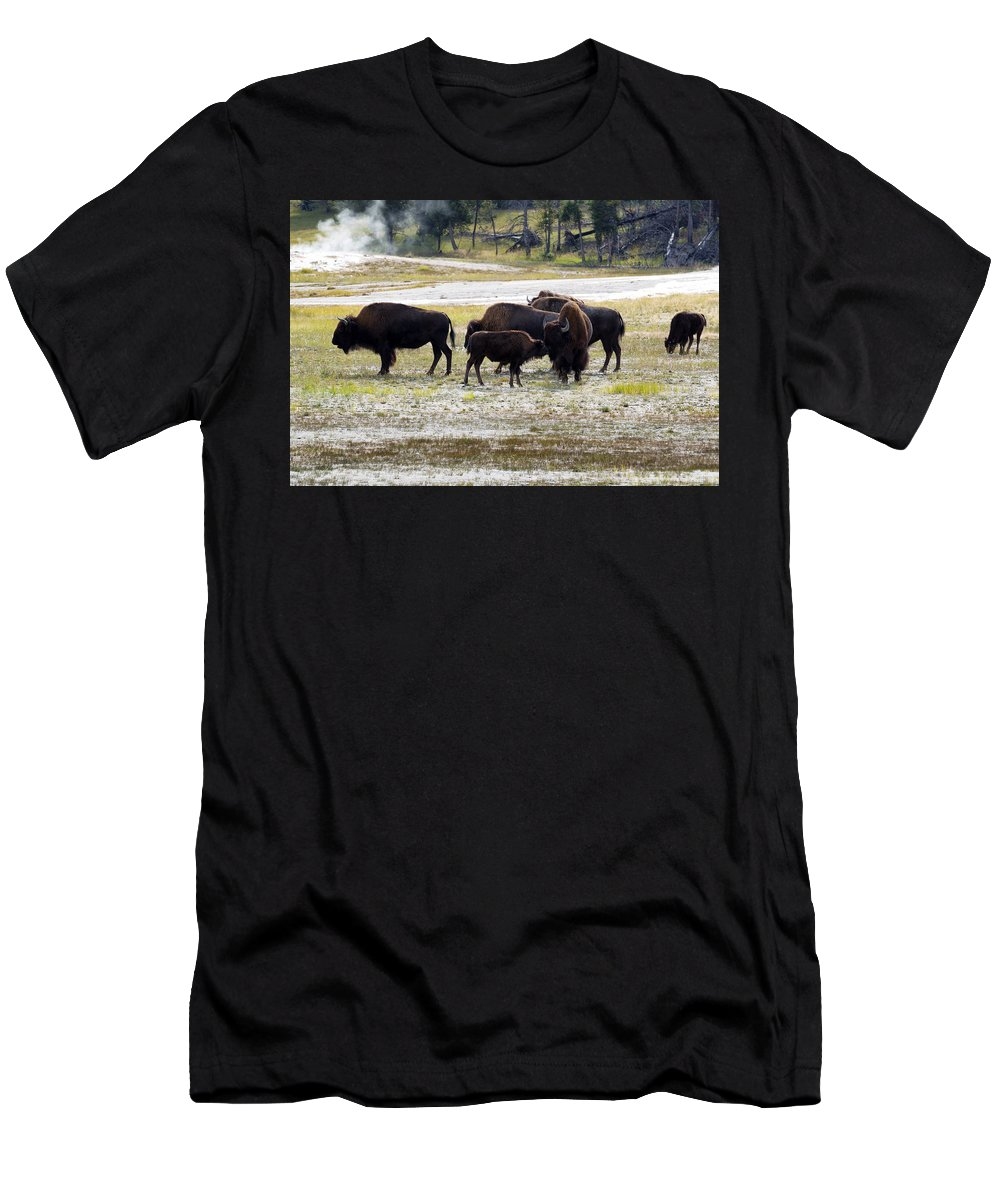 Bison Men's T-Shirt (Athletic Fit) featuring the photograph North American Female Buffalo And Her Offspring Showing Affecti by Thomas Baker