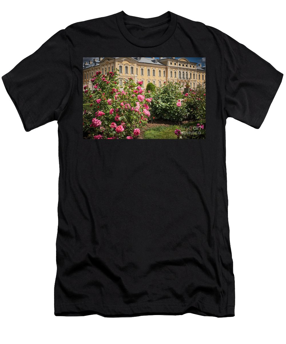 Rose Bush Men's T-Shirt (Athletic Fit) featuring the photograph A Beautiful Rose Bush Castle Park 1 by Valdis Veinbergs