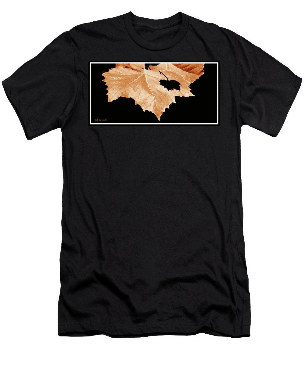 Shade Men's T-Shirt (Athletic Fit) featuring the photograph American Sycamore Leaf And Leaf Shadow by A Gurmankin