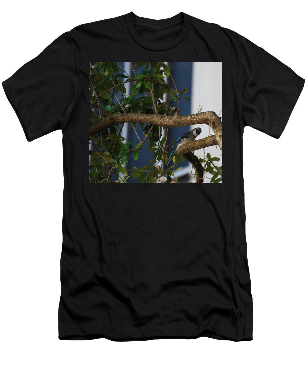 Birds Men's T-Shirt (Athletic Fit) featuring the photograph Blue Bird by Rob Hans