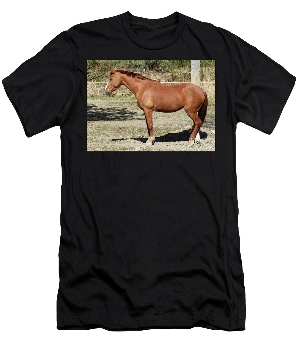 Horse Men's T-Shirt (Athletic Fit) featuring the photograph Brown Horse by Esko Lindell
