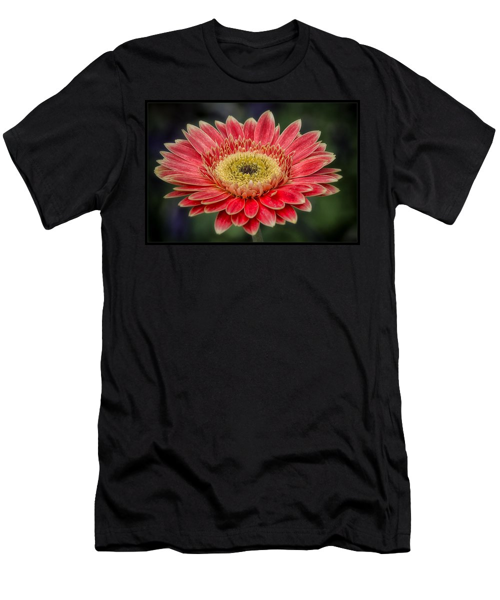 Gerbera Daisy Men's T-Shirt (Athletic Fit) featuring the photograph Colorful Daisy by Robert Fawcett