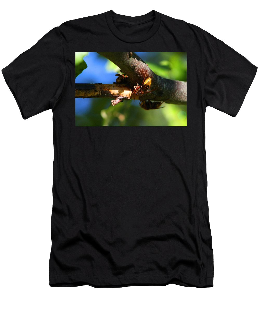 Hornet Men's T-Shirt (Athletic Fit) featuring the photograph European Hornets by Kathryn Meyer