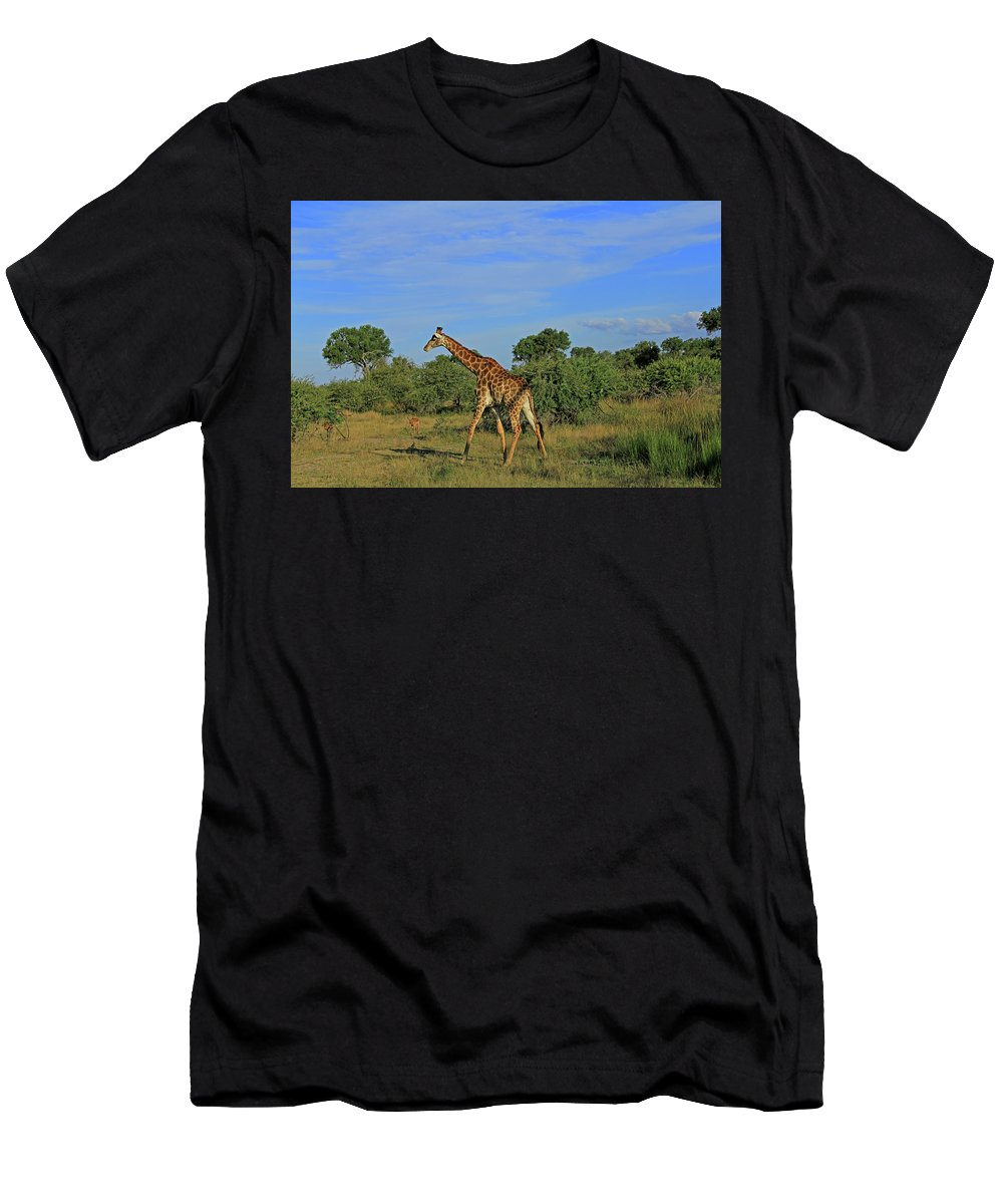 Giraffe Men's T-Shirt (Athletic Fit) featuring the photograph Giraffe by Richard Krebs