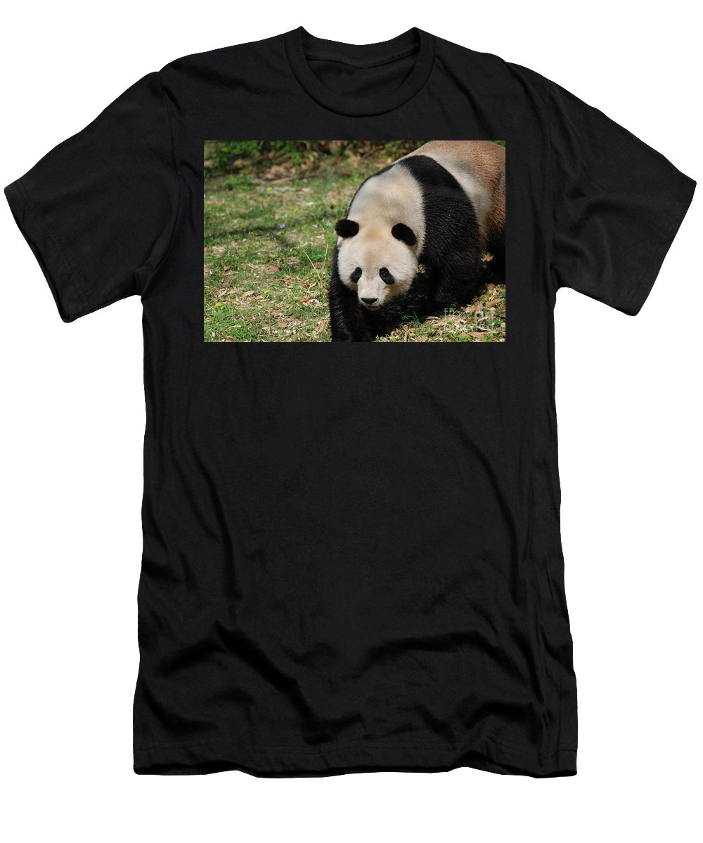 Panda Men's T-Shirt (Athletic Fit) featuring the photograph Gorgeous Black And White Giant Panda Bear Walking by DejaVu Designs