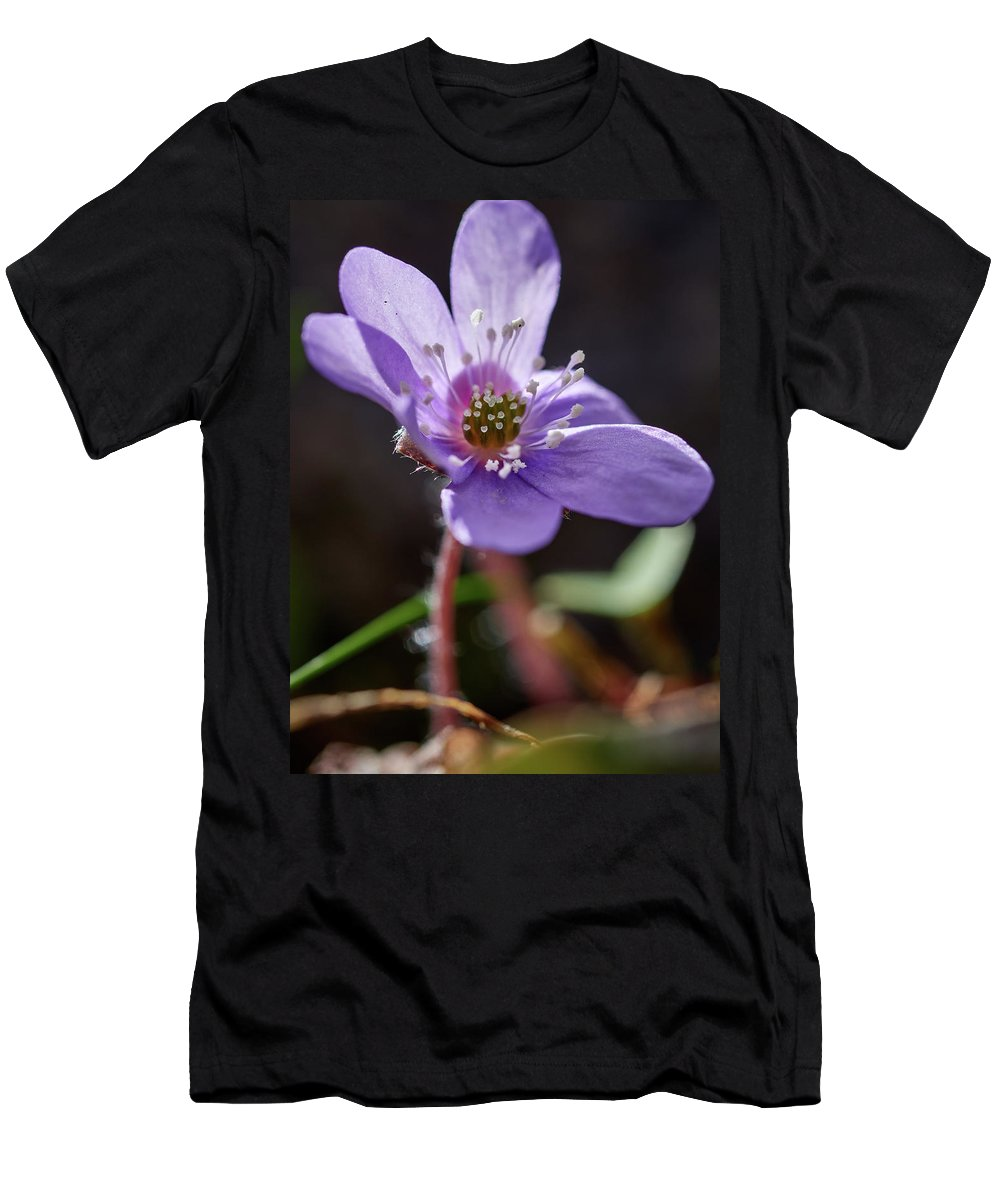 Anemone Hepatica Men's T-Shirt (Athletic Fit) featuring the photograph Hepatica 4 by Jouko Lehto