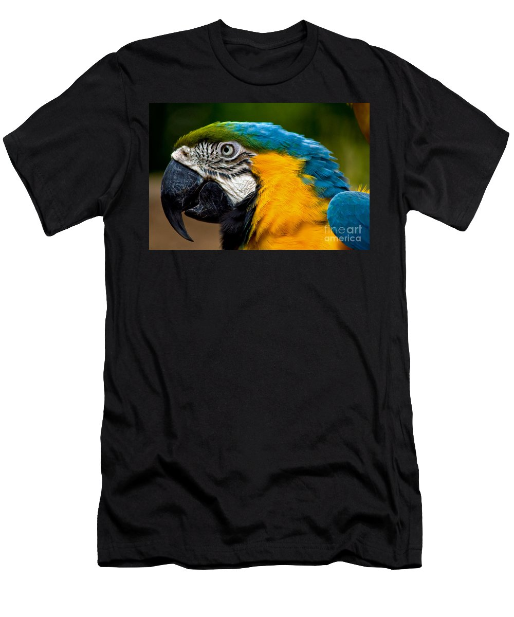 Macaw Men's T-Shirt (Athletic Fit) featuring the photograph Macaw by Thomas Marchessault