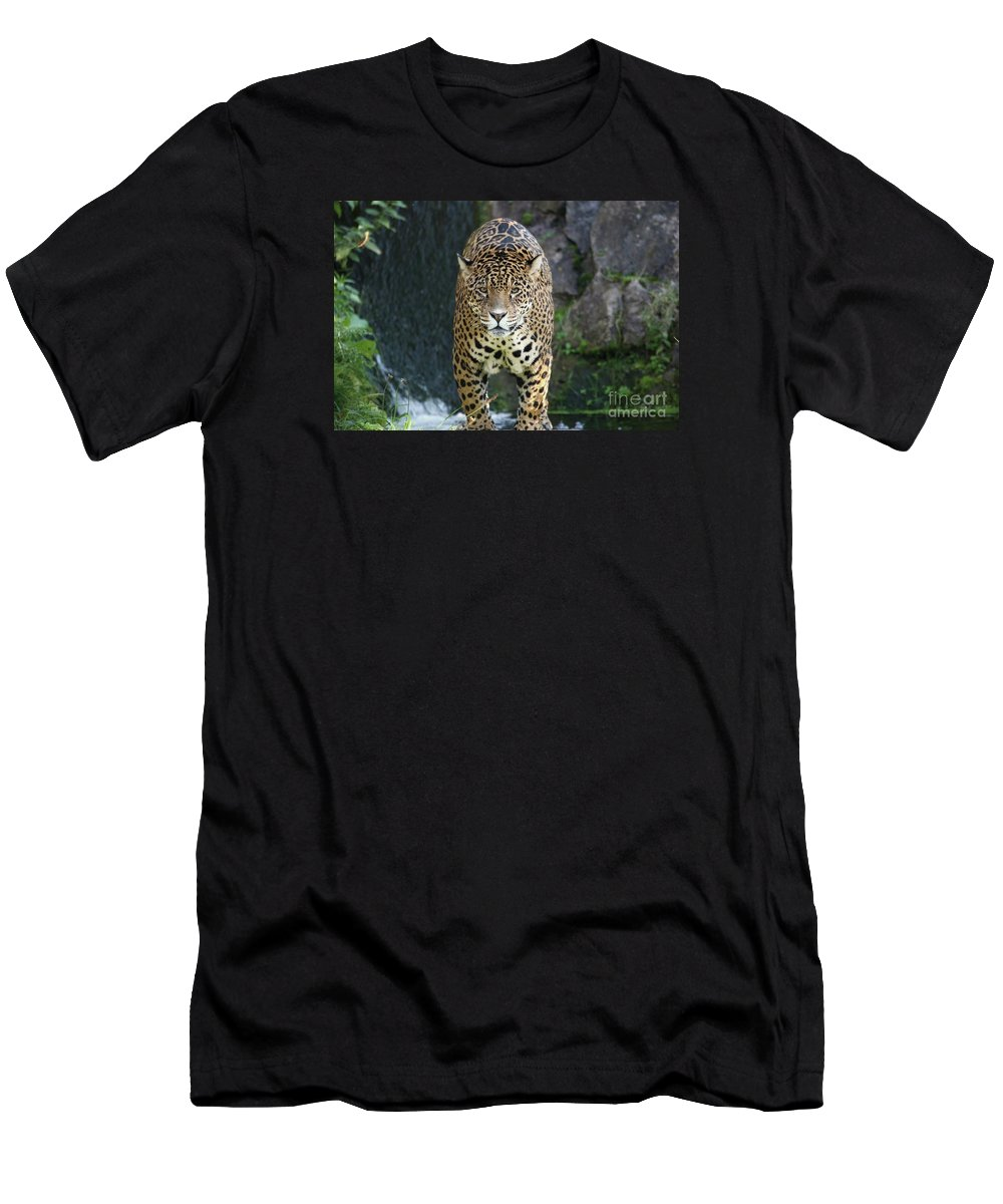 Animals Men's T-Shirt (Athletic Fit) featuring the photograph Male Leopard by Franco De Luca Calce Wildlife Photographer