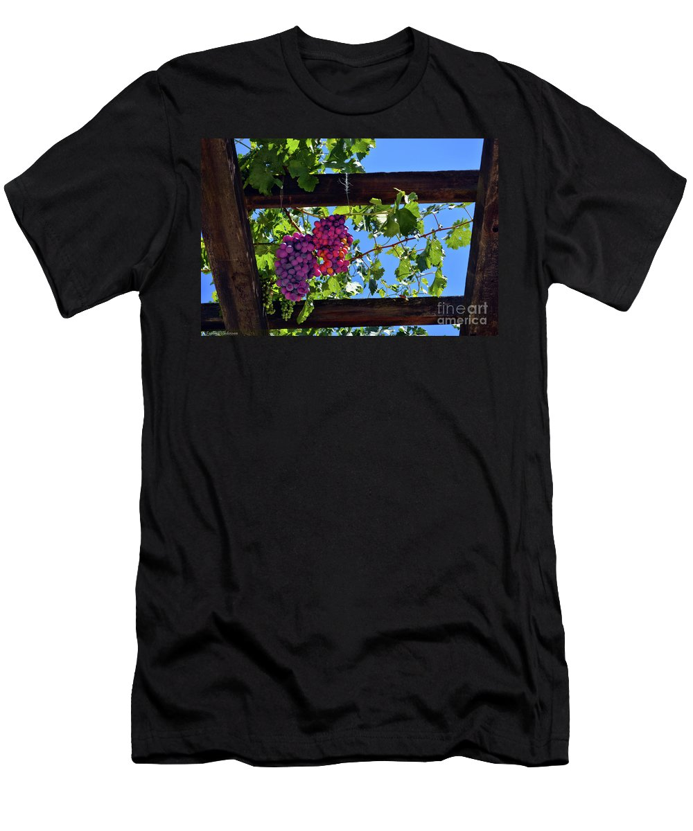 Inglenook Vineyard Men's T-Shirt (Athletic Fit) featuring the photograph Napa Valley Inglenook Vineyard -2 by Tommy Anderson