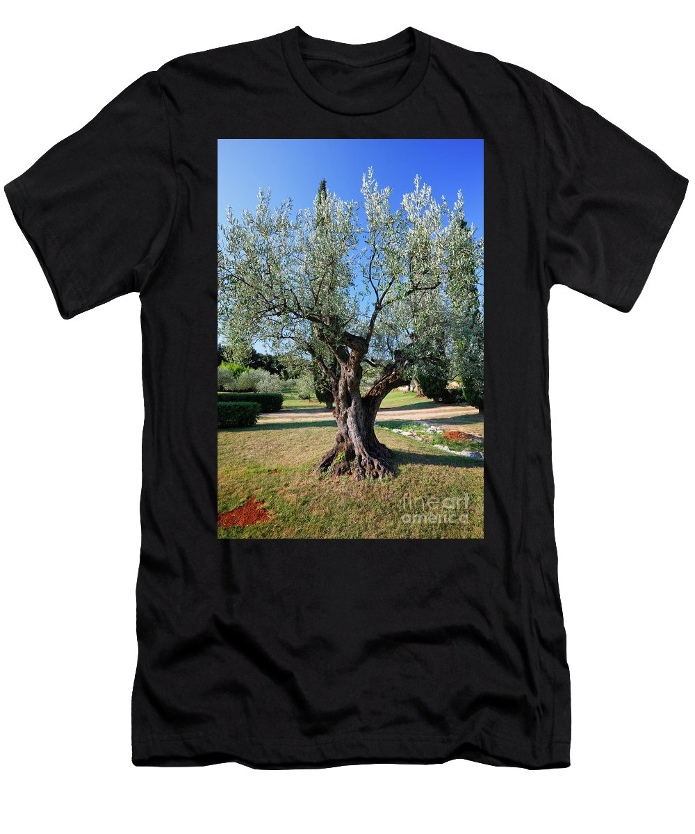 Tree Men's T-Shirt (Athletic Fit) featuring the photograph Olive Tree by Nino Marcutti