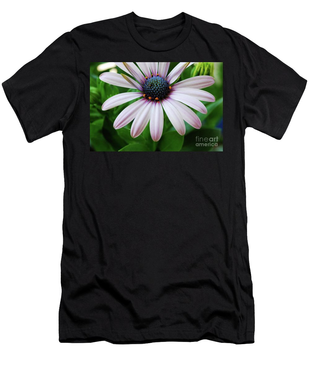 Daisy Men's T-Shirt (Athletic Fit) featuring the photograph Pink African Daisy by Nancy Mueller