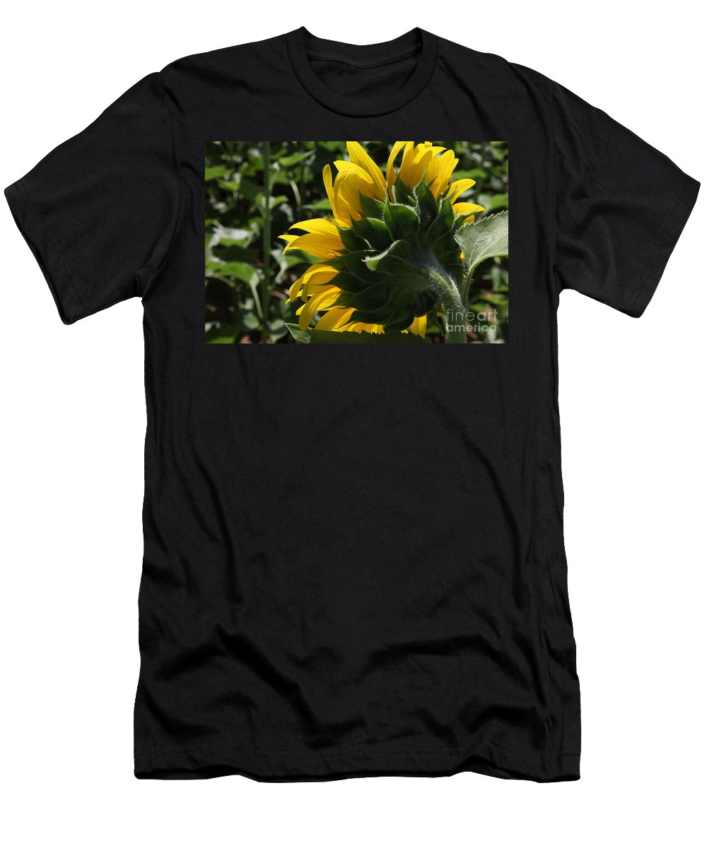 Sunflower Men's T-Shirt (Athletic Fit) featuring the photograph Sunflower Series 09 by Amanda Barcon