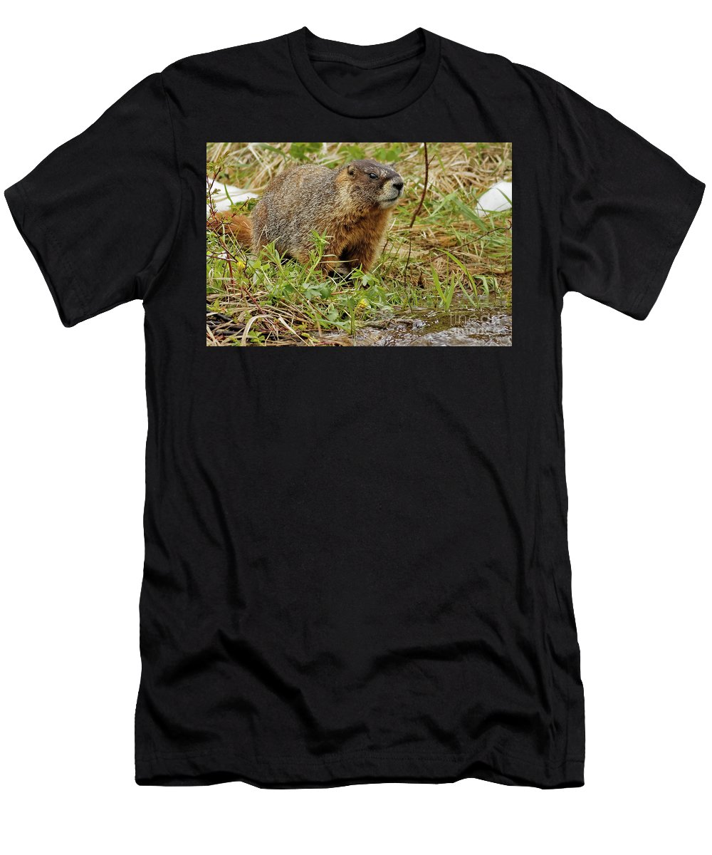 Marmot Men's T-Shirt (Athletic Fit) featuring the photograph Yellow-bellied Marmot by Natural Focal Point Photography