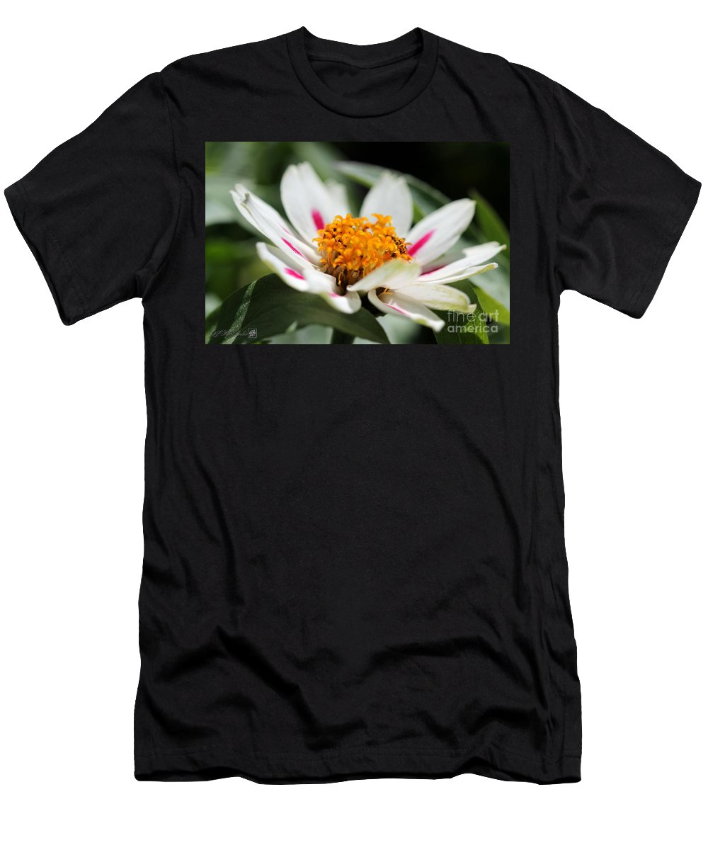 Mccombie Men's T-Shirt (Athletic Fit) featuring the photograph Zinnia Named Zahara Starlight Rose by J McCombie