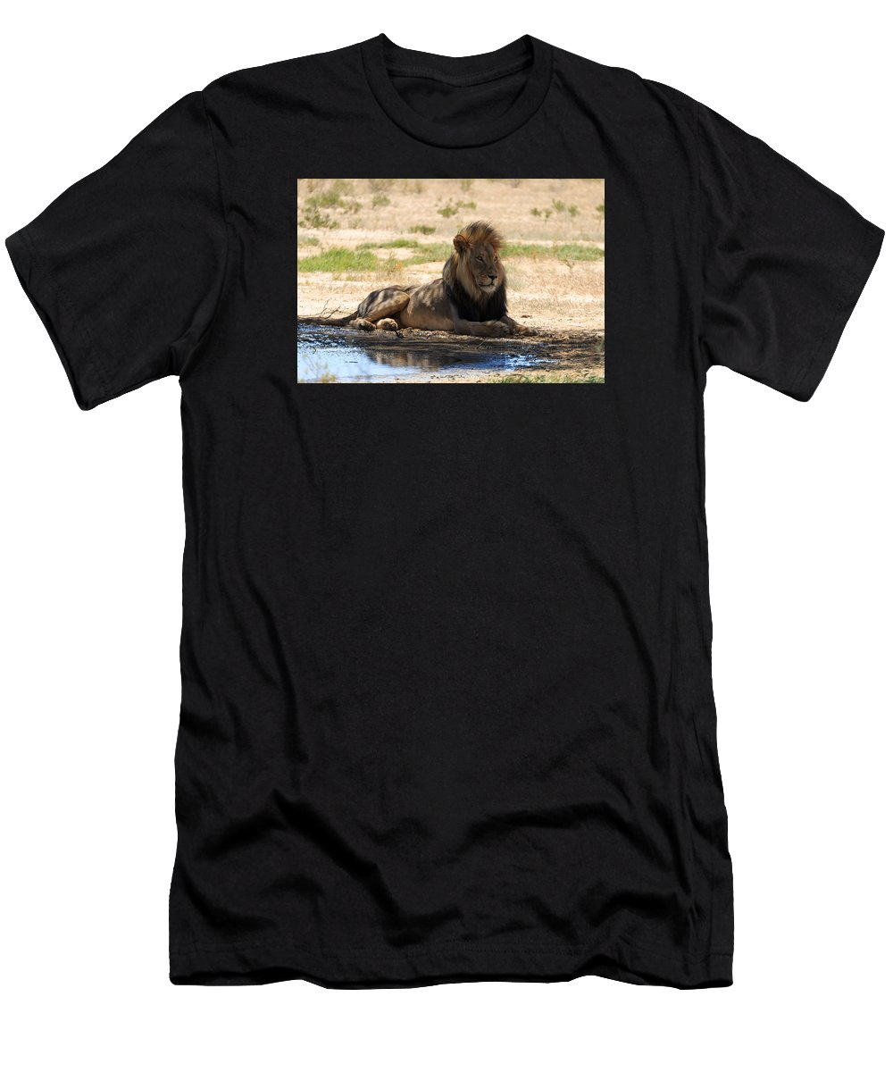 Kgalagadi Men's T-Shirt (Athletic Fit) featuring the photograph Lion by Davide Guidolin