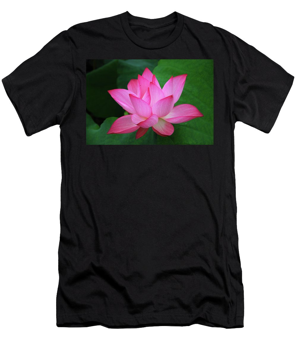 Lotus Men's T-Shirt (Athletic Fit) featuring the photograph Blossoming Lotus Flower Closeup by Carl Ning