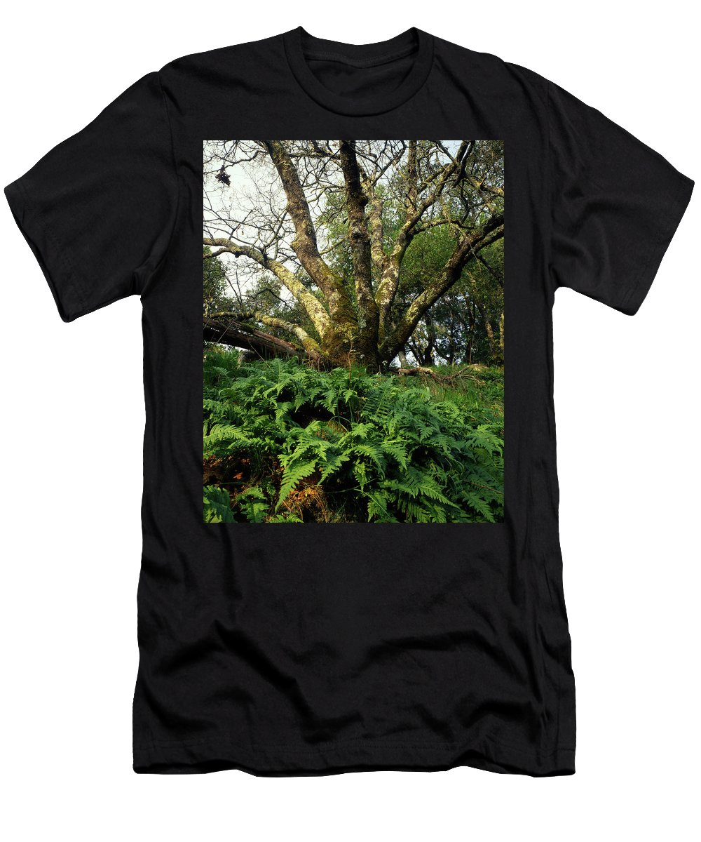Ferns Men's T-Shirt (Athletic Fit) featuring the photograph 1b6339 Frens And Oaks On Our Mountain by Ed Cooper Photography