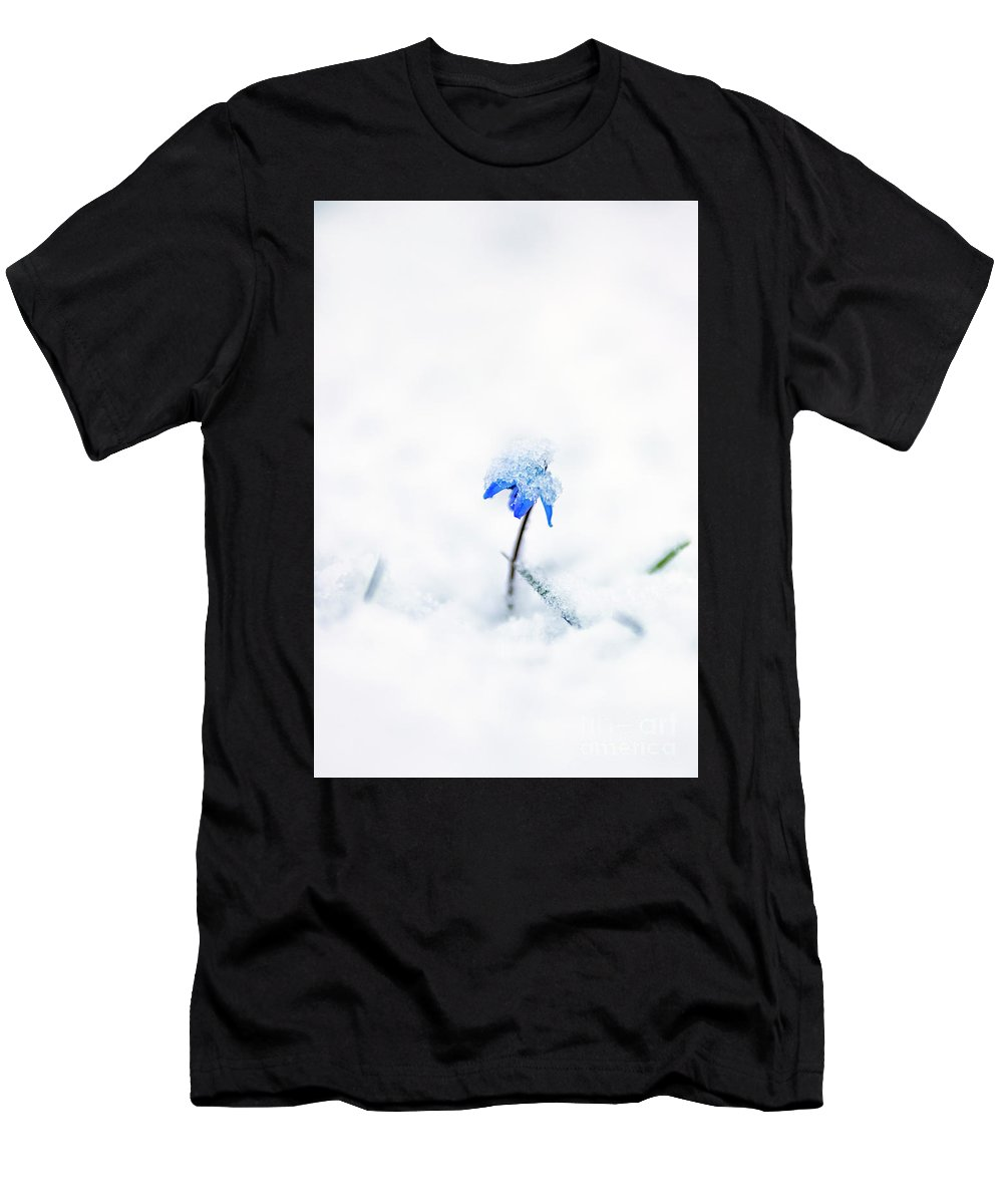 Bluebell Scilla Siberica Flower Lilies Lily Flowers Blooms Blossom Blue Small Garden Plant Plants Spring Back-light Light April White Snow Cower Covered Men's T-Shirt (Athletic Fit) featuring the pyrography Bluebell by Anita Raunio