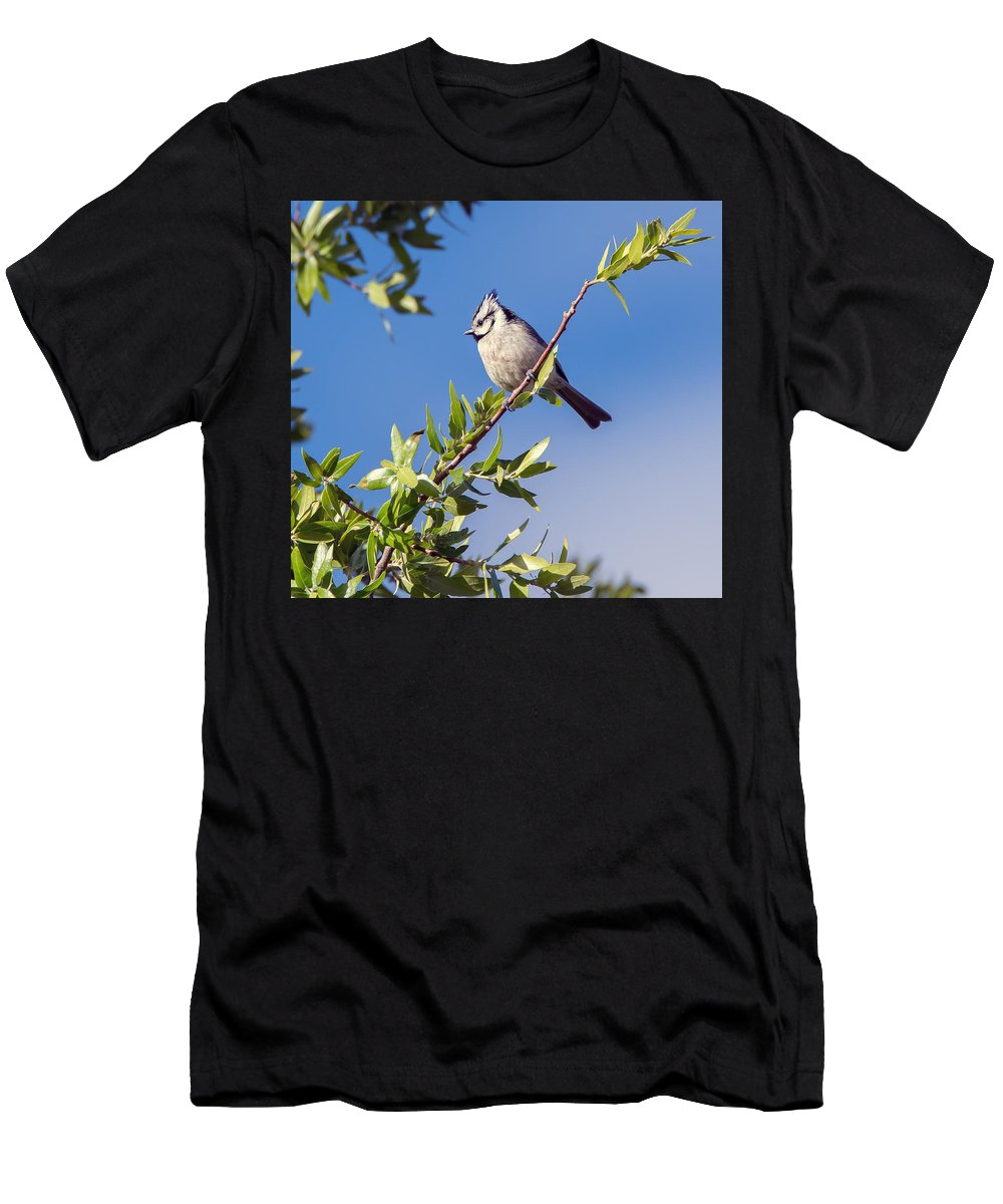 Bridled_titmouse Men's T-Shirt (Athletic Fit) featuring the photograph Bridled Titmouse by Tam Ryan