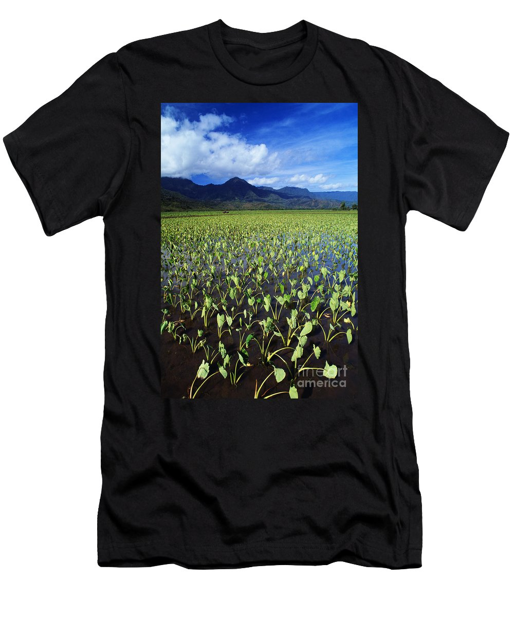 Afternoon Men's T-Shirt (Athletic Fit) featuring the photograph Kauai, Wet Taro Farm by Bob Abraham - Printscapes