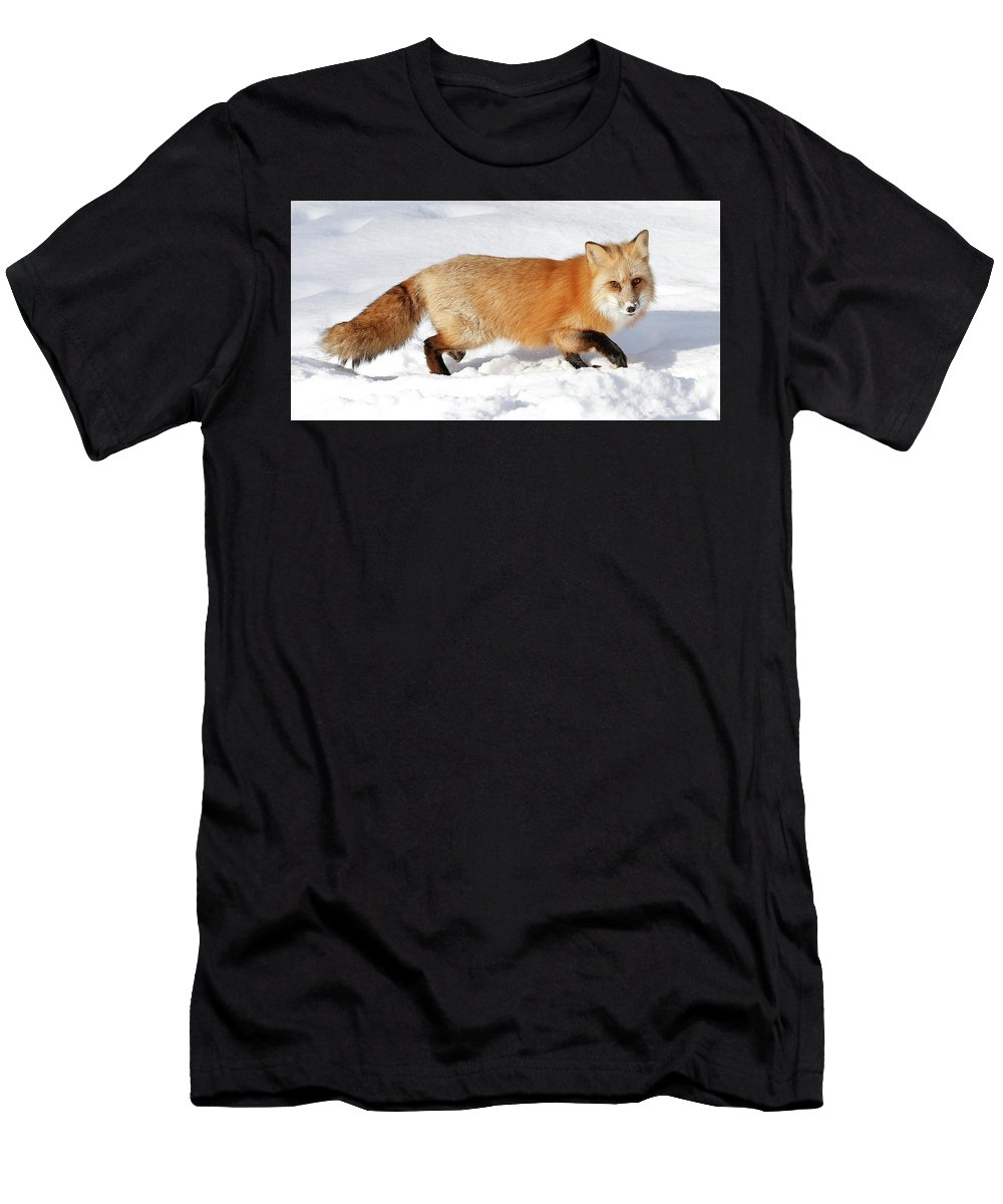 Red Fox Men's T-Shirt (Athletic Fit) featuring the photograph Sneaky Red Fox by Athena Mckinzie