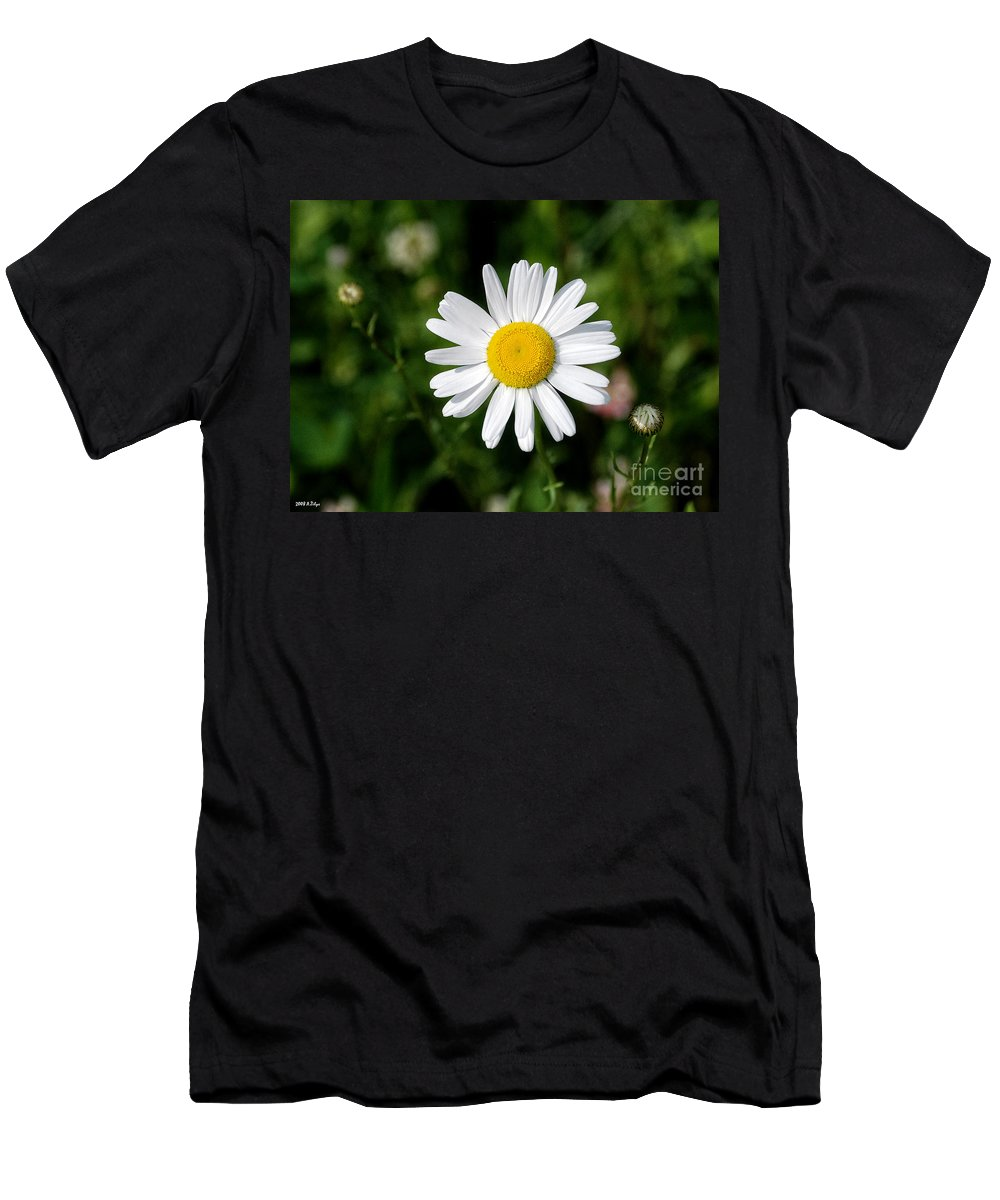 Flower Men's T-Shirt (Athletic Fit) featuring the photograph 2008 Daisy by Arvydas Zilys